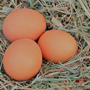 egg-1175620